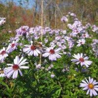 цветы :: Анатолий Кузьмич Корнилов