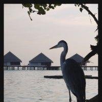 Мальдивы 5 :: Ekaterina Stafford