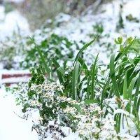 Первый снег. :: Елена Laskova