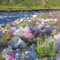 Сад камней. :: D. S.