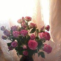 Розовые розы :: Галина