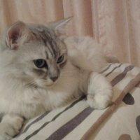 Спасть,всем пора спать...:) :: Жанна Викторовна