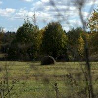 Осеннее поле :: Наталия Зыбайло