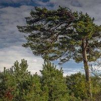 Несломленная ветром... :: juriy luskin
