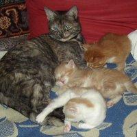 Из прошлой жизни. Моя Кисуля с котятами :: Андрей Лукьянов
