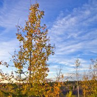 Осенний день в Мягрине :: Валерий Талашов