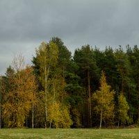 Осень. :: Yuri Chudnovetz