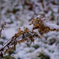 Первый снег :: Mavr -