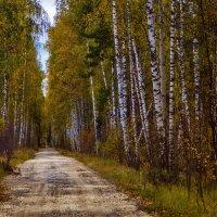 Осенняя аллея :: Андрей Дворников