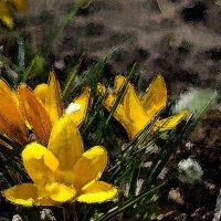 Весна :: Игорь Шубовичь