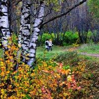 Старый парк :: Борис Гуревич