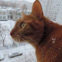 Снег идёт. :: bemam *