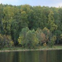 лес :: алексей турта