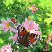 Butterfly :: Виктория Чурилова