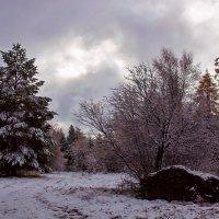 После октябрьского снегопада :: Анатолий Иргл