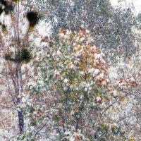 Первый снег :: Nikolay Monahov
