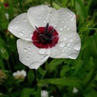 Под дождиком ленок,весь до ниточки промок. :: nadyasilyuk Вознюк