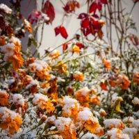 первый снег :: Стас Иванов
