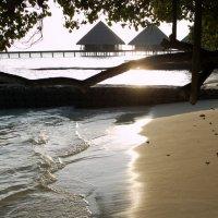 Мальдивы 12 :: Ekaterina Stafford