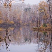 Осенняя палитра :: Павел Сухоребриков