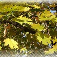 Осенние листья. :: Чария Зоя