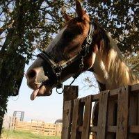 """Если б я имел коня, это был бы номер !"""" :: vasya-starik Старик"""