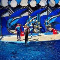 Вместе с дельфинами. :: СветЛана D