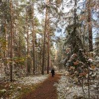 С первым снегом. :: Дмитрий Постников