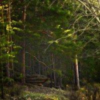 Магия леса :: Алексей Глашкин