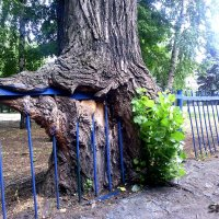 Смотреть под ноги полезно! Часть 2. Дерево. 12 фото :: Наталья (ShadeNataly) Мельник