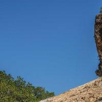 на острове Комодо :: Александр