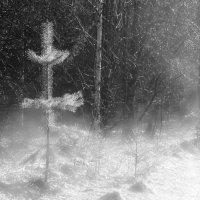 В покрывале тумана :: Валерий Молоток