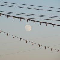 Луна :: Виктория Чурилова