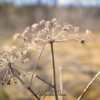 Весна :: Ольга Шульгина