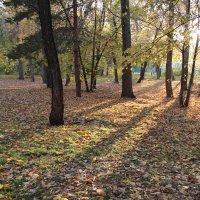 Осеннний парк :: Илья Кузнецов