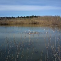 Старый пруд :: Валерий Молоток