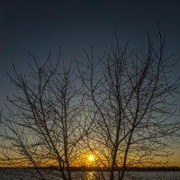 Дерево на закате :: Григорий Храмов