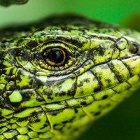 Зеленый змей :: Aleksandr Kachan