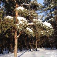Снежно :: текила *