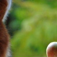 Мой кот Кокос и яблоко.( натюрморт ) :: Виталий Виницкий