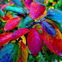 Яркие краски осени. :: Наталия Павлова