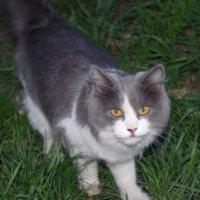 Кошка :: Сергей Боярских