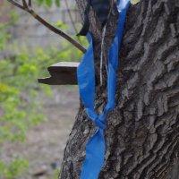 Дерево с джентельменскими замашками :: Сергей Боярских