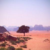 Необычная пустыня. :: Валентина Потулова