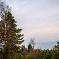 Дороги России. Подмосковье. :: Александр Шмалёв