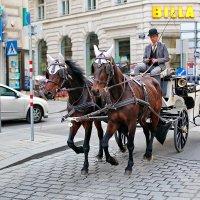 Где то в Вене... :: Александр Вивчарик