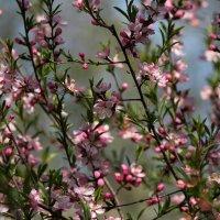 цветение :: Ekat Grigoryeva