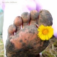 Весна идет неспешными шагами.. :: Любовь Шихова