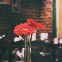 кофейня :: Катя Полуянова