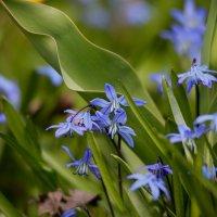 Цветение весны :: Андрей Белецкий